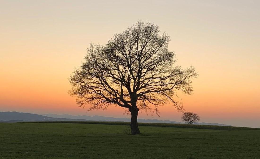 Yoga Stunde in der Natur